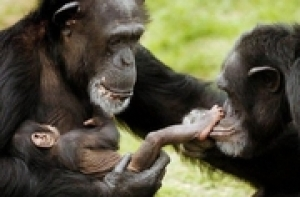 Petition to release the Rockville 15 to a chimpanzee sanctuary