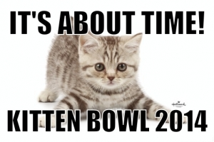 THE BIGGEST SUNDAY IN ALL OF SPORTS HAS A BRAND NEW TRADITION! HALLMARK CHANNEL'S 'KITTEN BOWL'