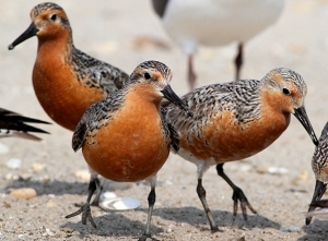 Climate Deal Decision Puts Birds at Risk