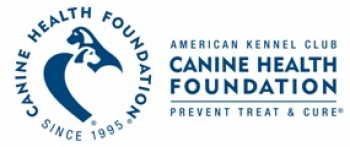 Flat-Coated Retriever Foundation and Golden Retriever Foundation Add Matching Funds for Canine Hemangiosarcoma Research