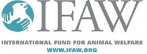 IFAW Statement on the Killing of a Giraffe & Zebra  by 12-Year Old Trophy Hunter